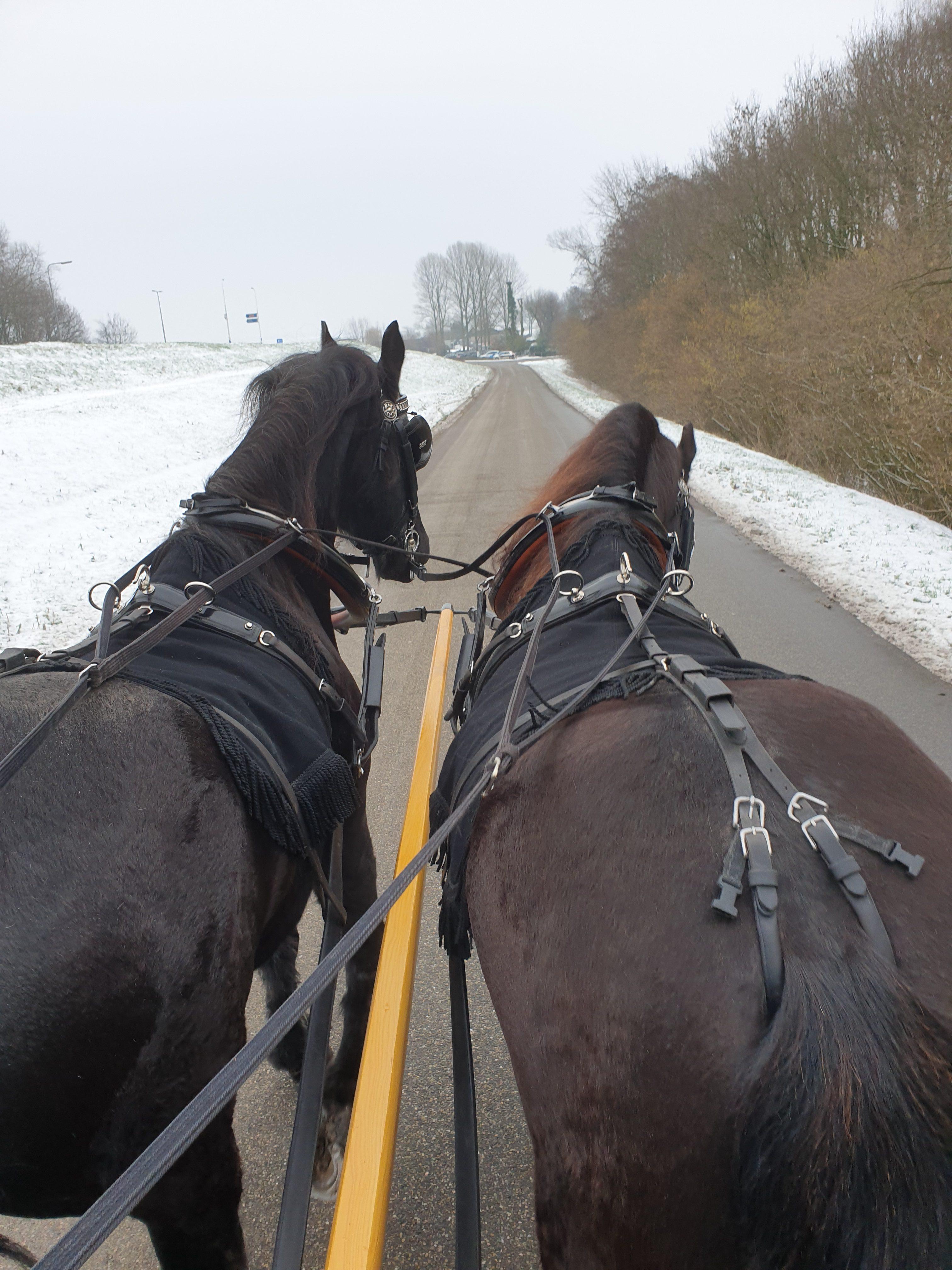 Met paard en wagen naar de uitvaart